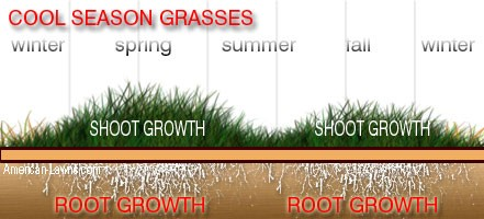 Image Source: http://www.american-lawns.com/
