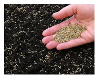 Red Hen Turf Farm - Grass Seed
