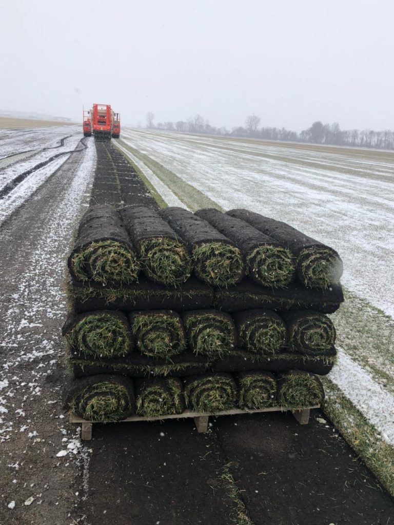 Red Hen's 1st 2018 Harvested Pallet of Kentucky Bluegrass Sod - WINTER IS HOLDING ON STRONG!